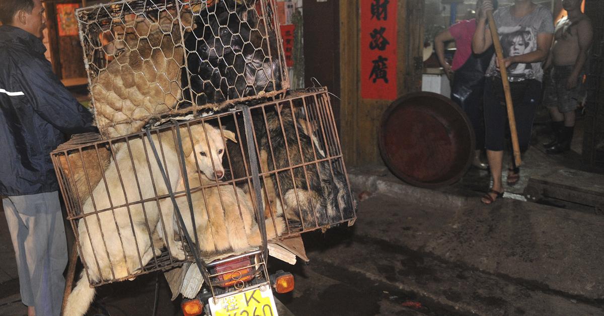 Festival de Carne de Yulin