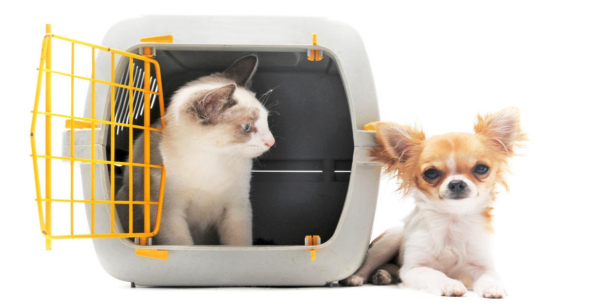 Como viajar con tu perro en trasporte público