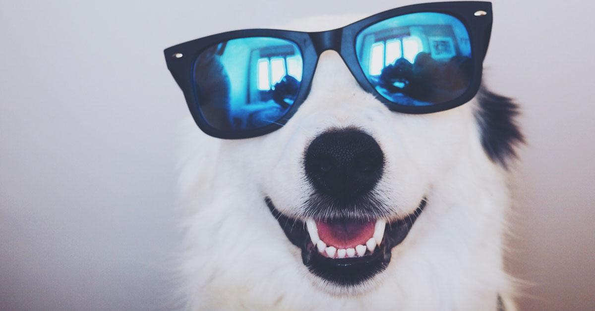 animales-que-te-sacaran-una-sonrisa