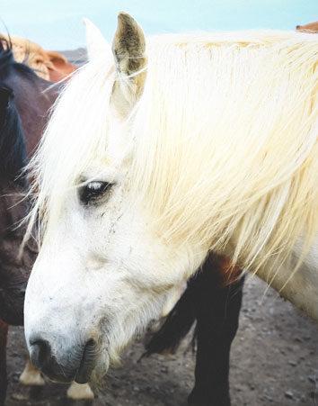Acabemos con el sufrimiento de los animales en mercados y ferias