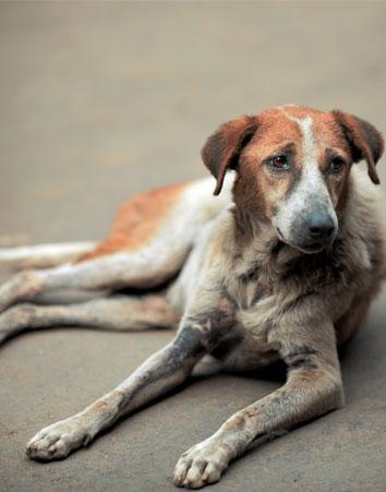 Penas Más Duras Para Los Organizadores De Peleas De Perros Guíaongs