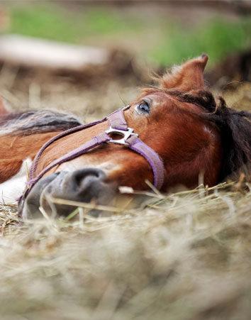 Firma para que no mueran más caballos en La Romería de El Rocío