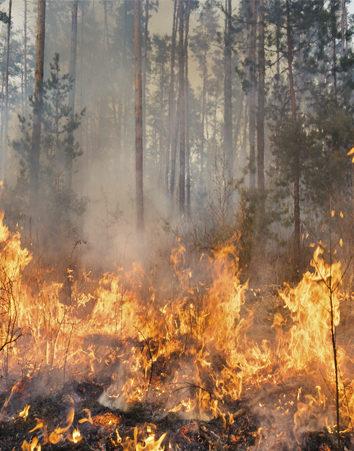 ¡FIRMA! Modificar la nueva Ley de Montes para acabar con el negocio de los incendios