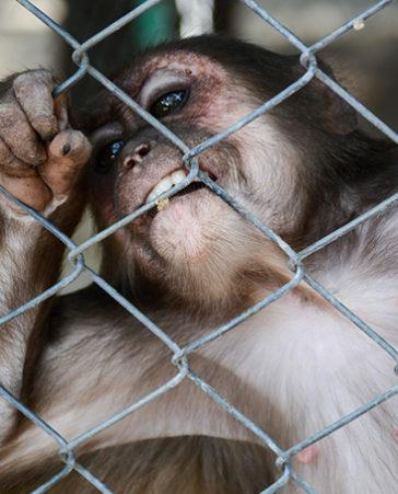 Por una legislación que prohíba la experimentación con animales. ¡Firma!