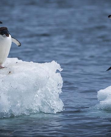 ¡Firma! Para la protección del Antártico