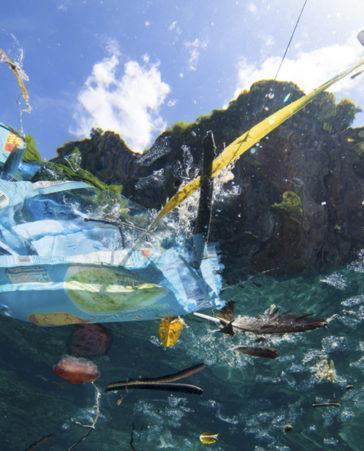 Firma para conseguir océanos libres de plásticos