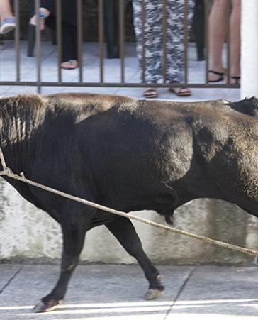 Firma para que prohíban los espectáculos con toros