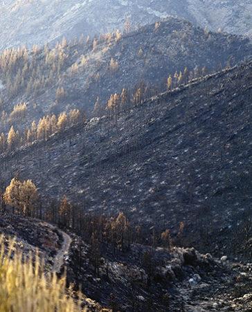 Los bosques necesitan una limpieza urgente para evitar la propagación de incendios ¡FIRMA!