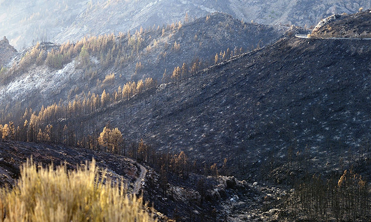 Monte quemado (Pixabay)