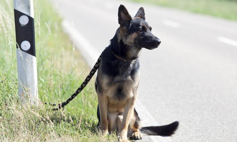 Perro abandonado en la carretera (istock)