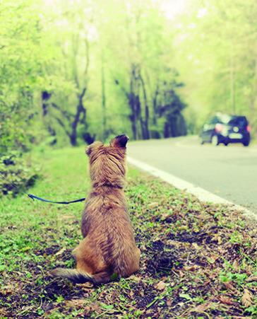 Tenemos que acabar con el abandono animal: ¡Firma ya!