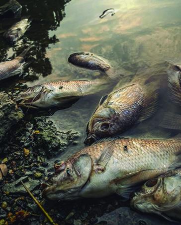 El río Tajo se está muriendo: Firma ahora para salvarlo