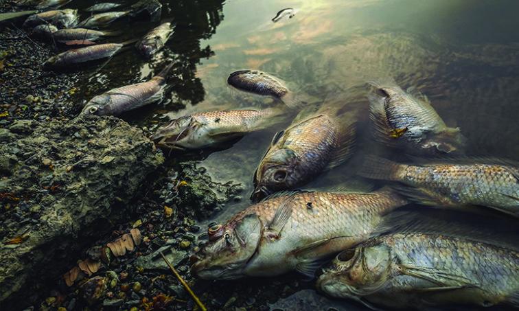 Peces muertos en la orilla del río (istock)