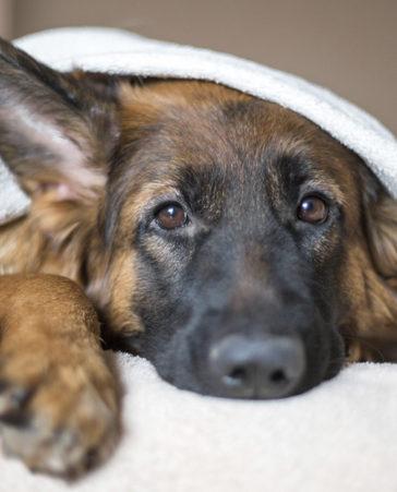 No compres y adopta para acabar con el maltrato en el mercado animal