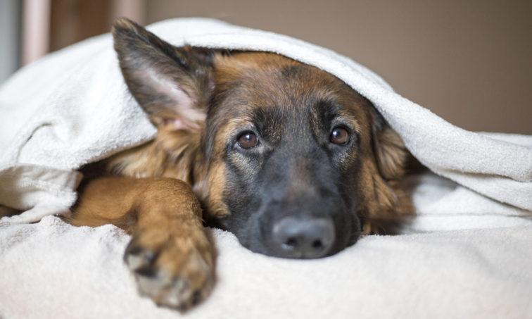 No compres y adopta para acabar con el maltrato en el mercado animal (Istock).