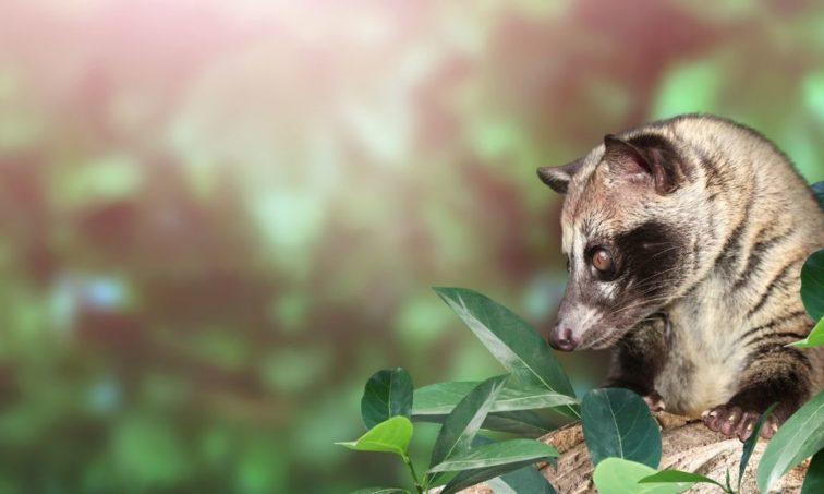 Animal exótico de Asia (iStock)