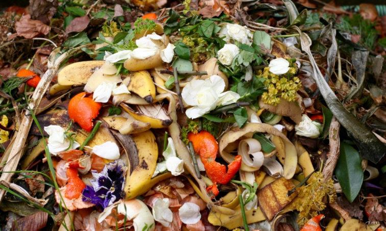 El desperdicio de alimentos es un problema real (Istock)