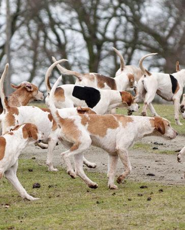 Firma para la protección de los perros de caza