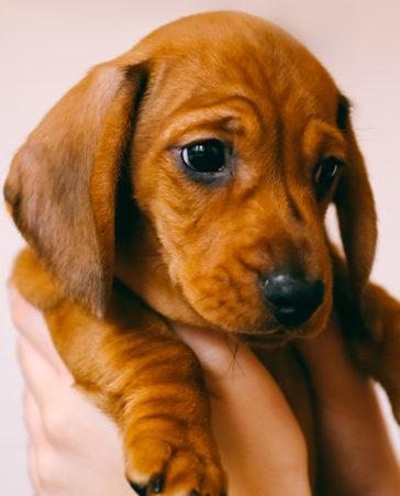 Firma para que no se regalen animales esta Navidad