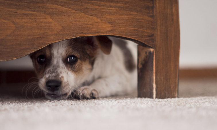 Firma para la prohibición de petardos por nuestras mascotas (Istock).