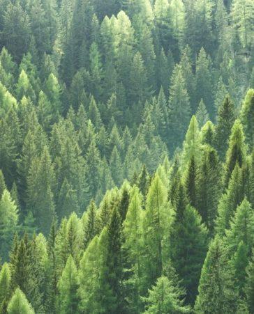 Firma para endurecer las penas a quienes queman los bosques