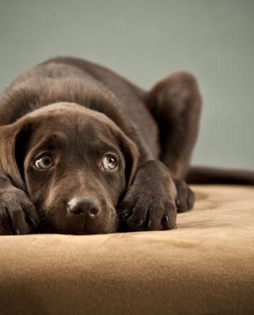 Firma para que los perros de más de 10kg puedan viajar en trenes