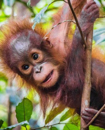 Firma para que prohíban las plantaciones de aceite de palma