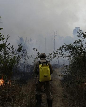 Firma para que los gobiernos ayuden a acabar con los incendios del Amazonas