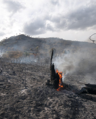 Crisis medioambiental en España por los incendios provocados